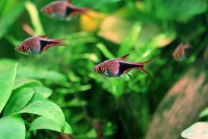 fish that school