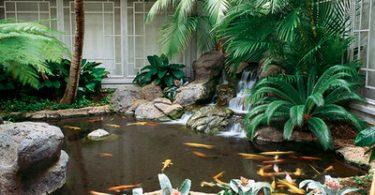 plants for ponds
