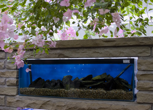 fish tank on the floor